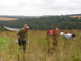 Members of the review team doing some conservation activities