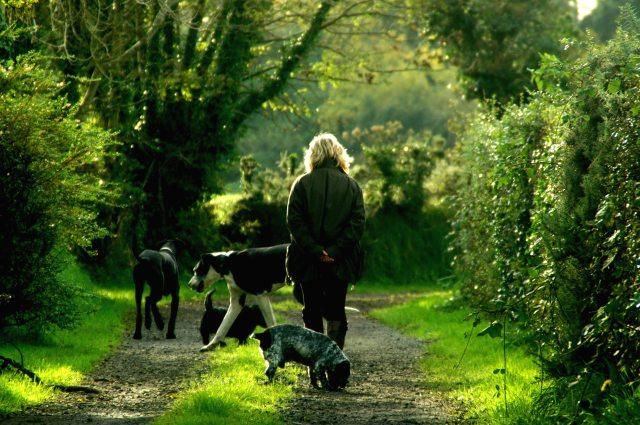 animals-dogs-lady-62379.jpg