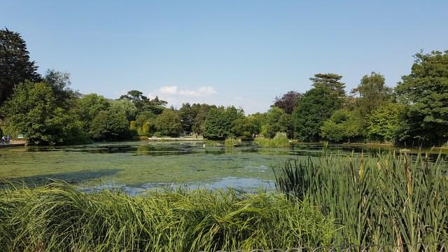 Pond in an urban park